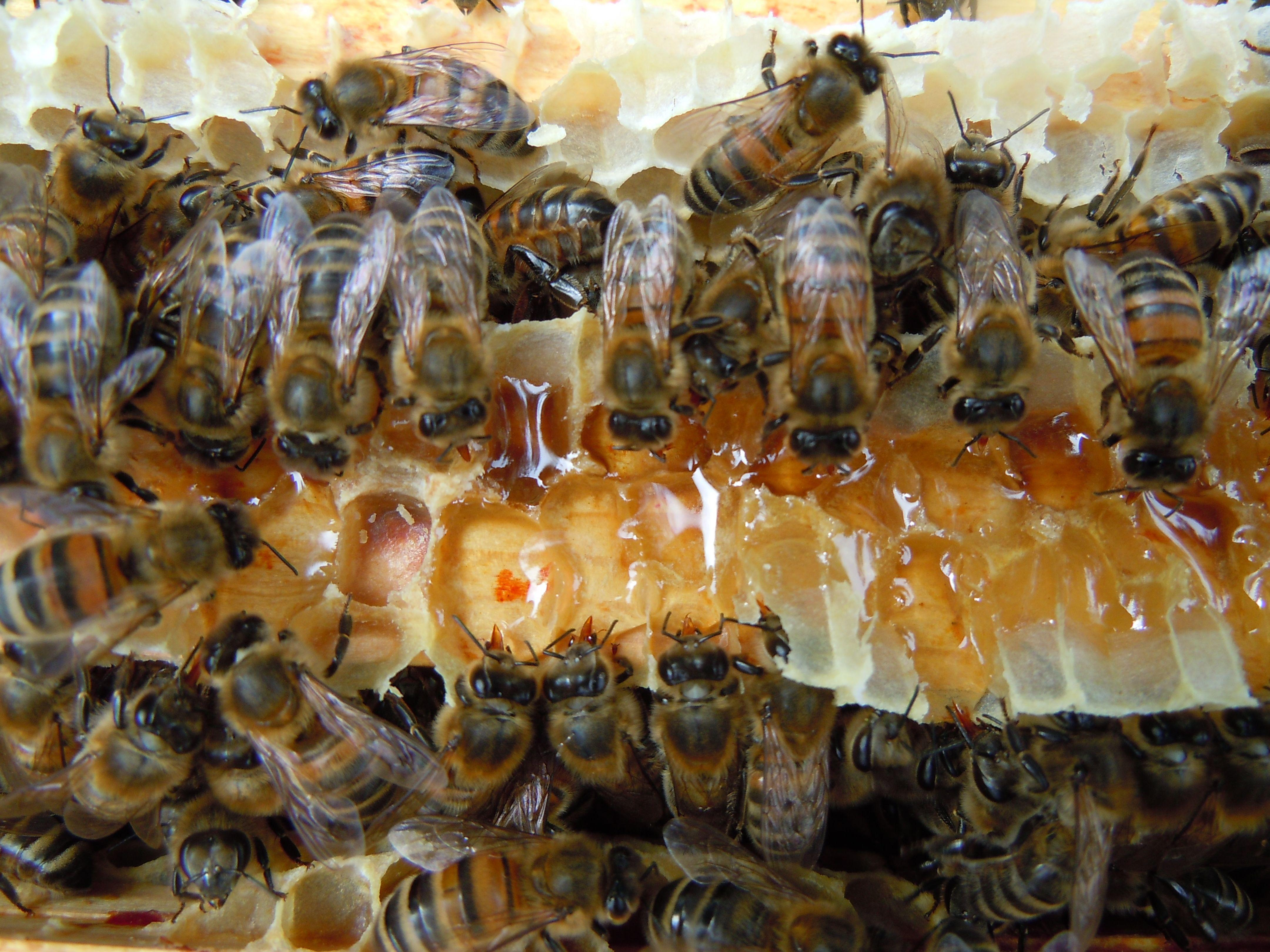 Introduction to Bees