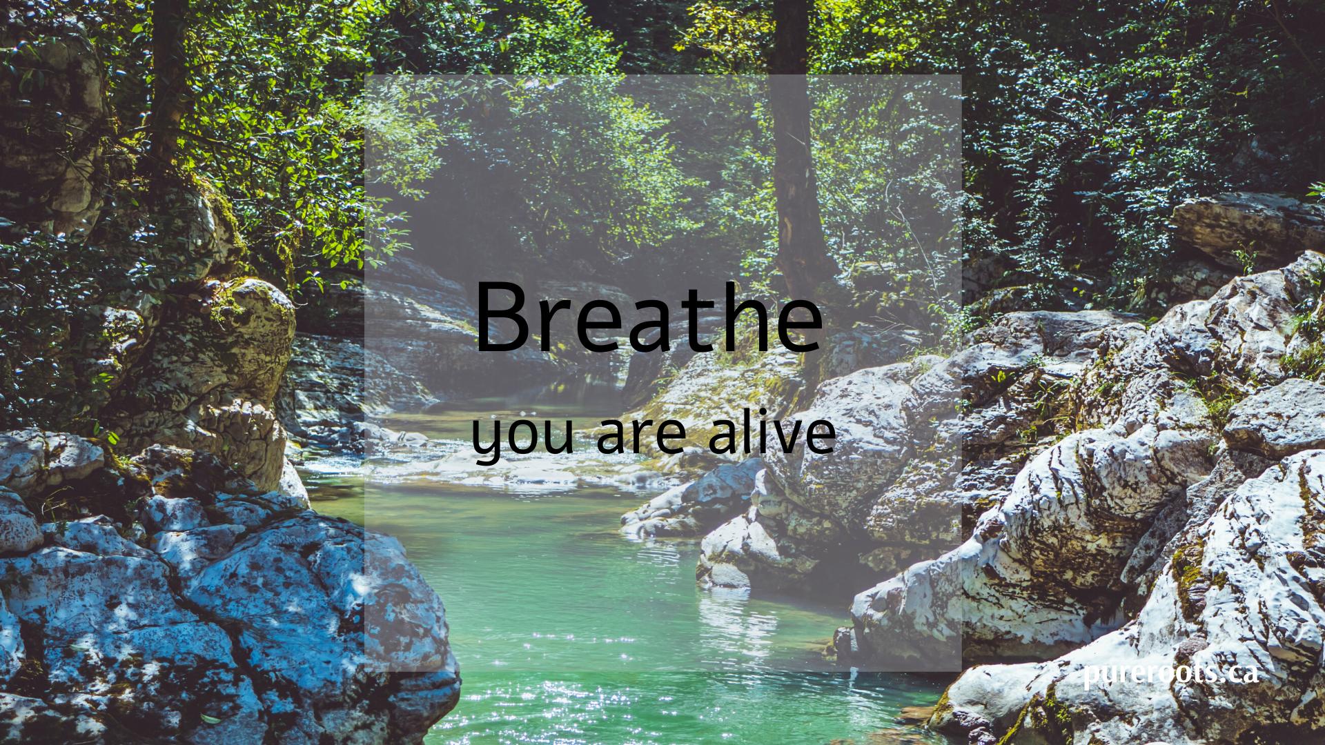 Breathwork Journey ~ An Active Meditation