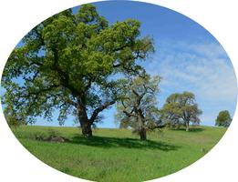 3rd Tuesday at Arastradero Preserve!