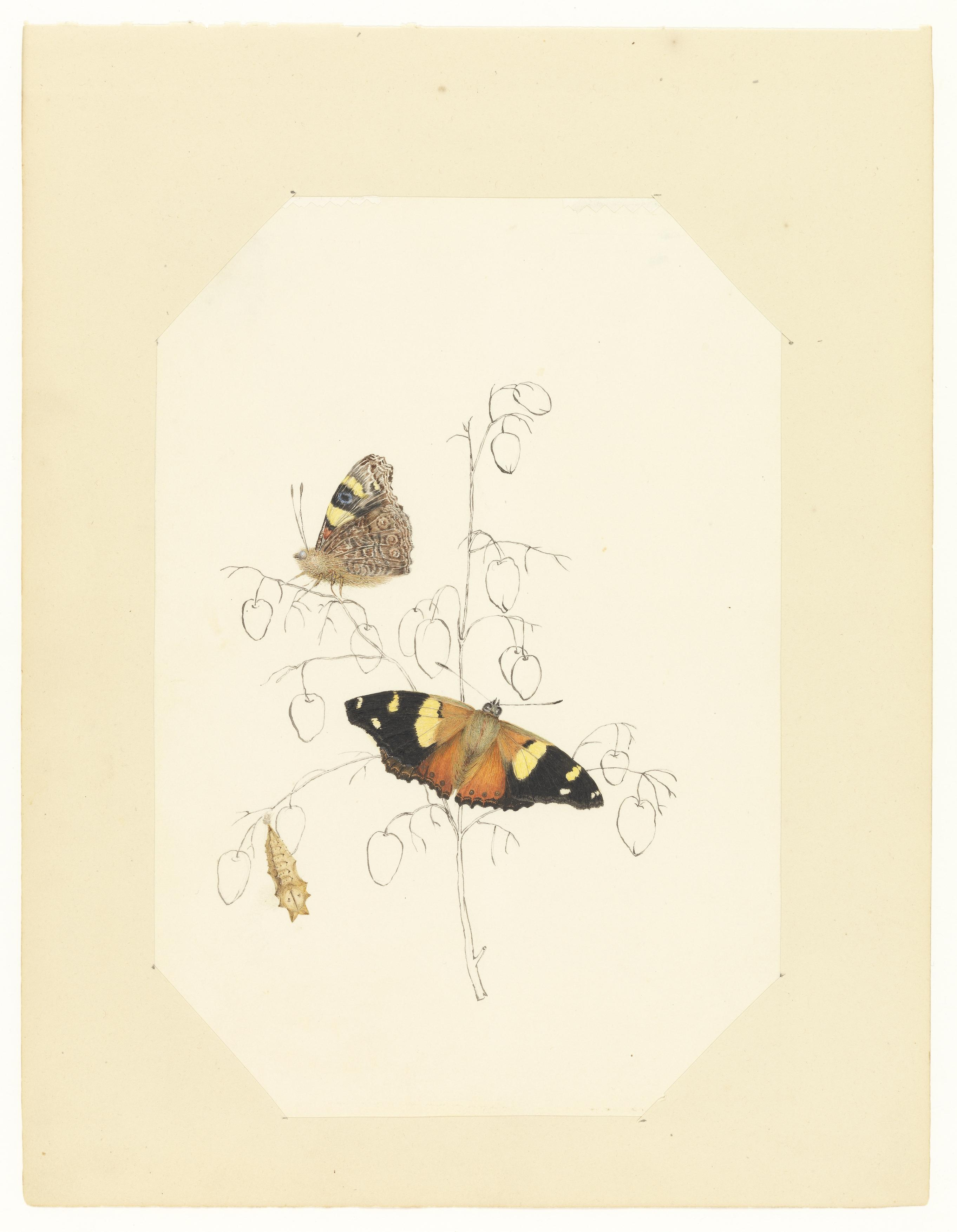"""Paige Gleeson – """"A butterfly, a tiger, an egg, a fowl, and eight spears"""""""