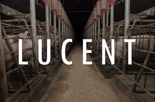 'Lucent' Brisbane screening - documentary about...