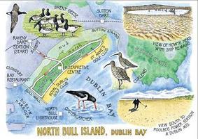 DIT Volunteering - Bull Island - Clearing Sea Buckthorn