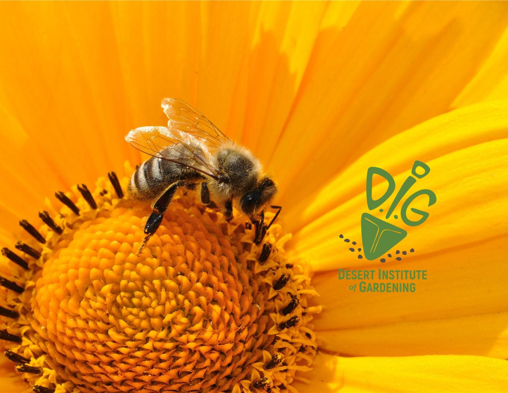 Desert Institute of Gardening: Buzz About Bees