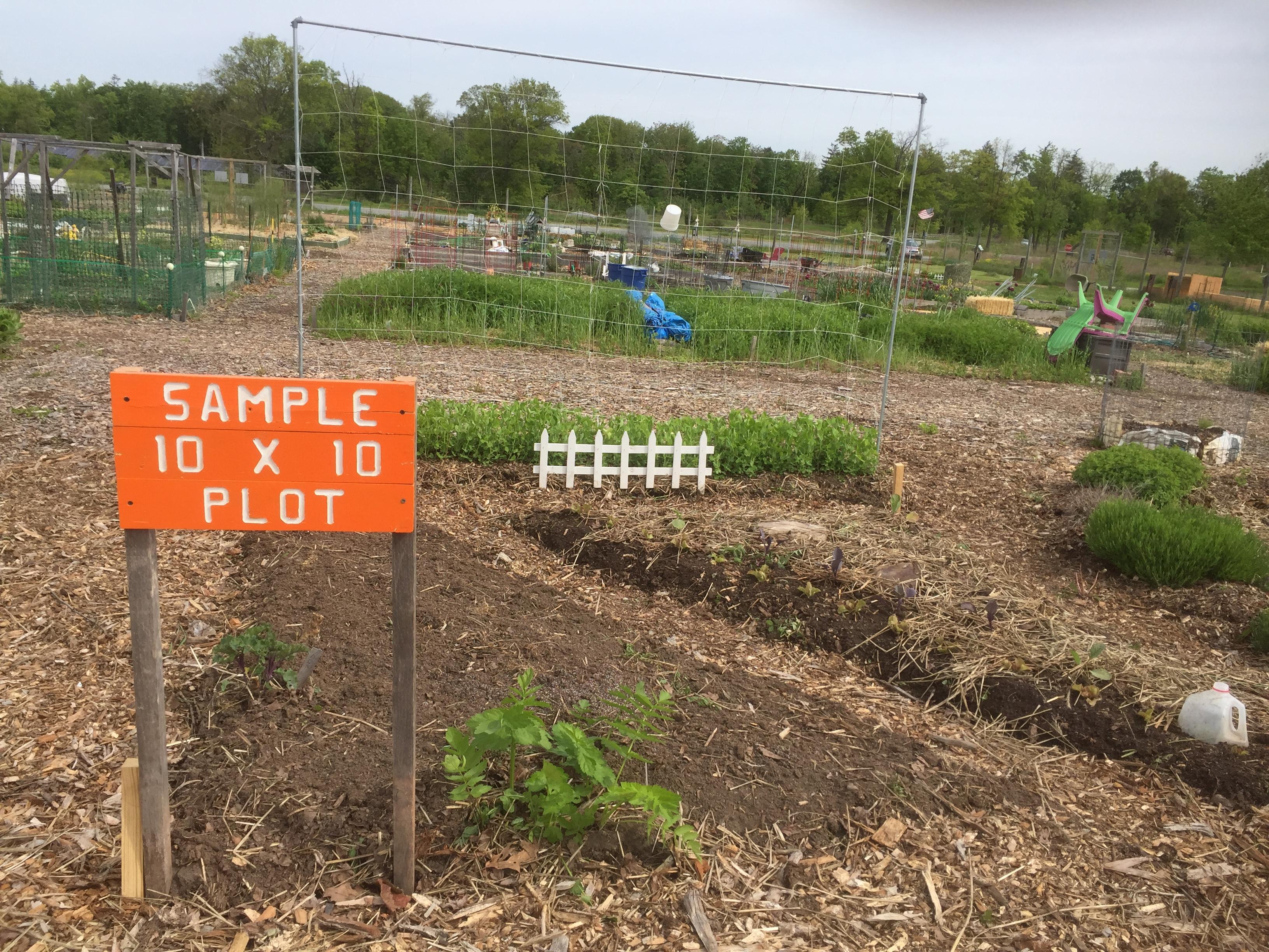 Planning Your Garden for Beginners