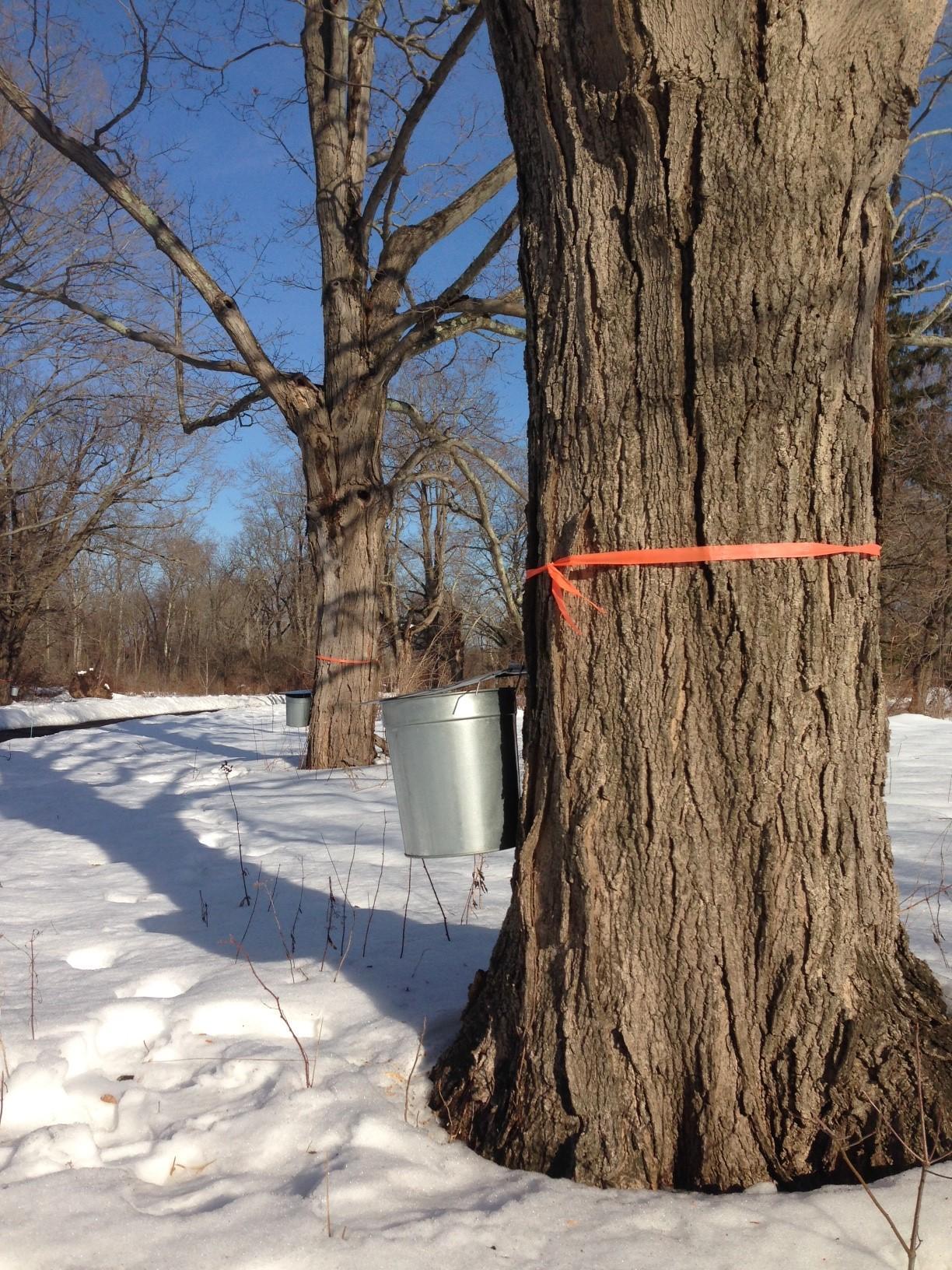 Sugar Bush Nature Hike