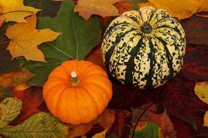 PROMISE AGEP Fall Harvest Dinner 2014