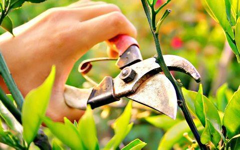 Pruning Fruit Trees Workshop