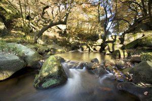 Women's Photography Workshop: Landscape, Trees and Plants, Peak District