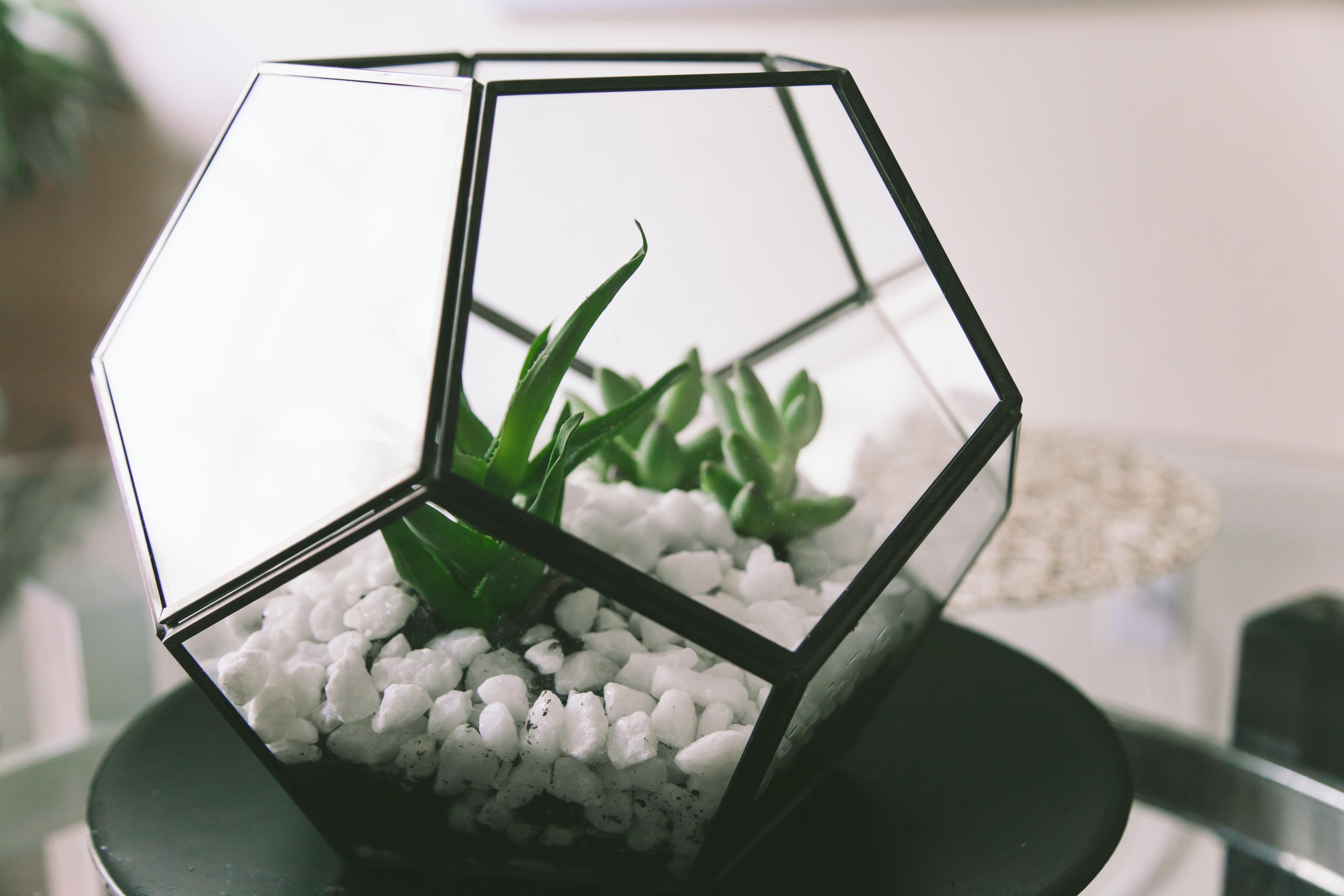 DIY Workshop   Terrarium Building: Plant Habitat Building