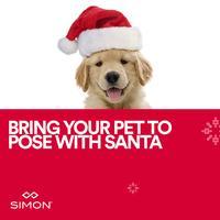 Pet Photos with Santa #2