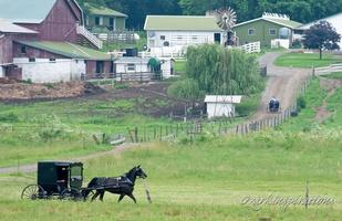 Amish Day Trip: Real Housewives of Holmes County, Ohio