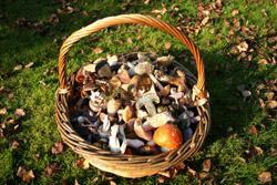 Wild Food Fest - Fungi Forage