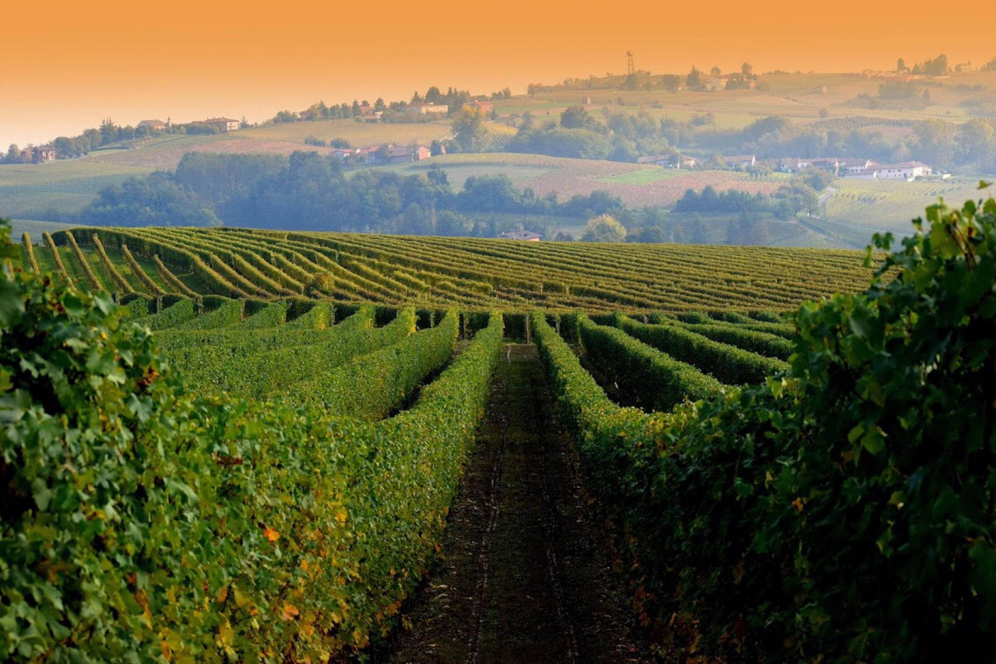 Great Wines of Italy 2020: SF Grand Tasting