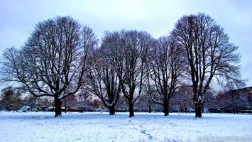 Winter Tree Walk: The Basics