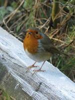 Dawn Chorus Bird Walk in Holland Park