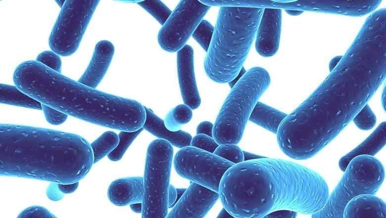 Do probiotics really work?