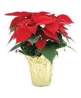 Make and Break Arts Foundation-POINSETTIA SALE!