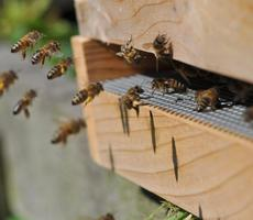 An introduction to Bee-Keeping