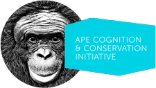 Ape Cognition & Conservation Initiative logo