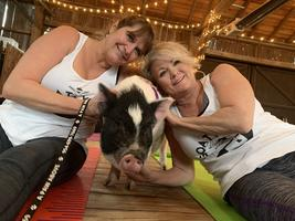 Yoga with Adoptable Pigs (Downward Dog & Little Hogs)