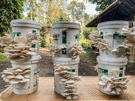 Low Tech Mushroom Growing