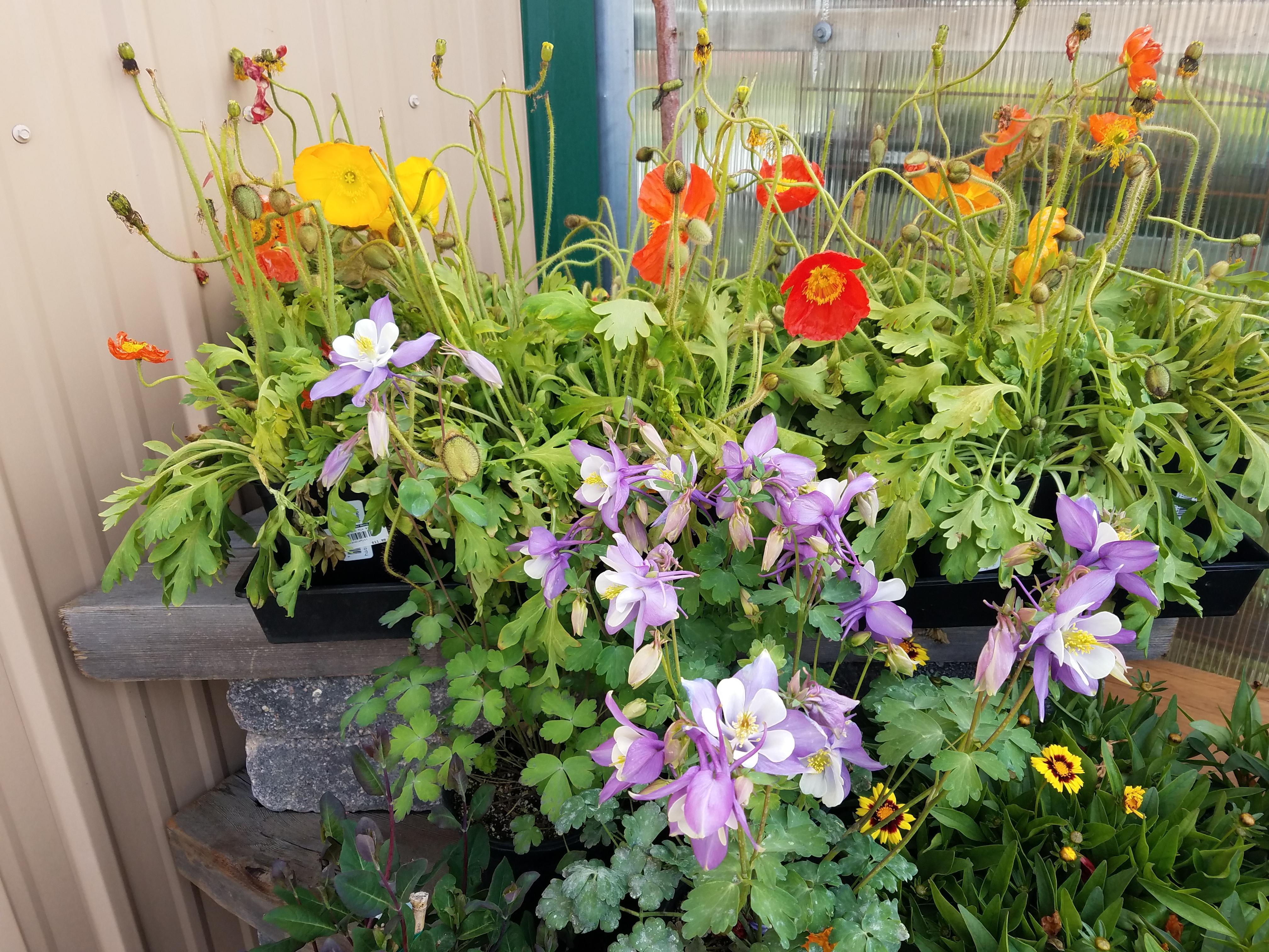 Perennial Garden Design Part 2 7 May 2020