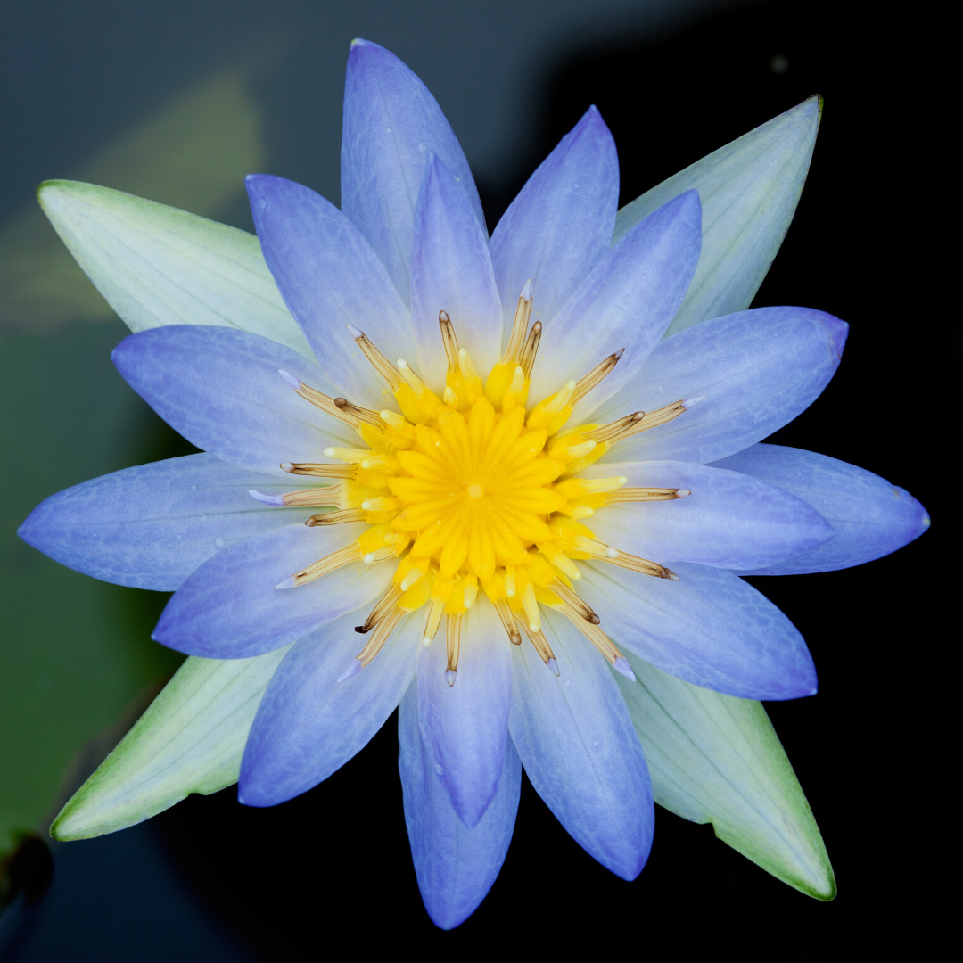 Part 5: Journeying into the Galactic Realms with Blue Lotus Spirit Plant (Psychic Development Circle)