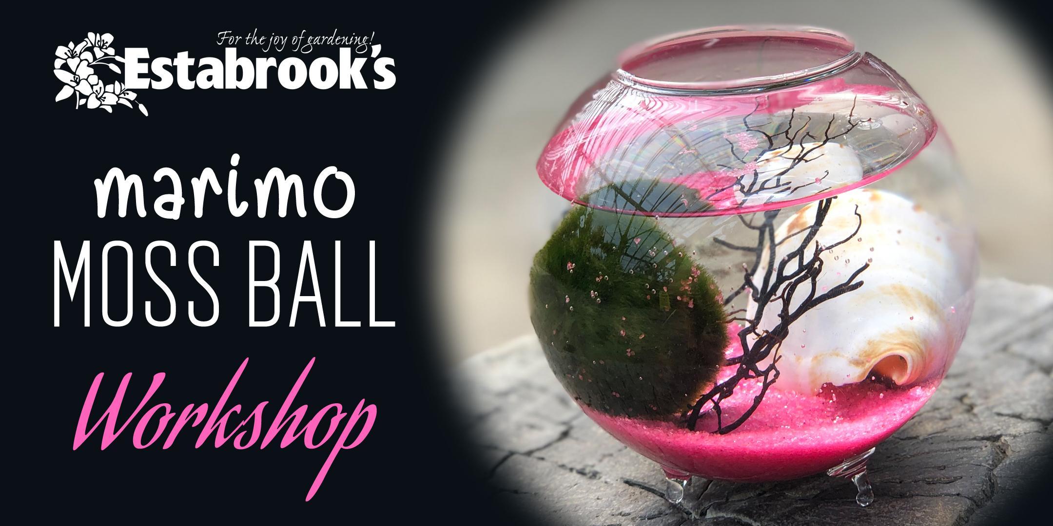 Marimo Moss Ball Workshop