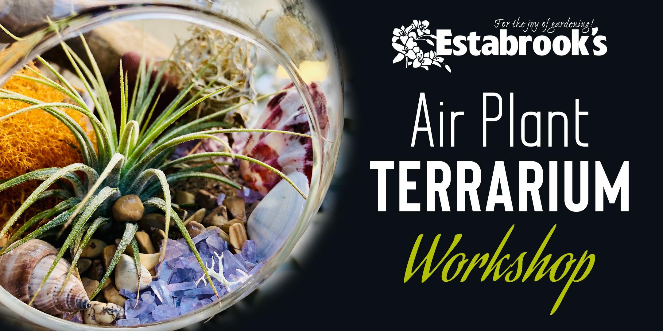 Air Plant Terrarium Workshop