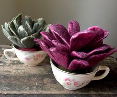 Adult/Teen Class: Felted Succulents