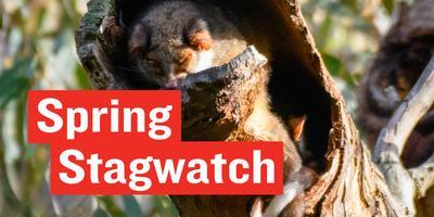 Stagwatch - World Habitat Day