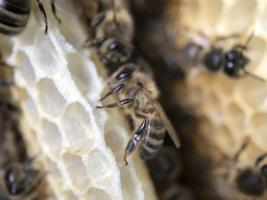 Waar bijen wonen…