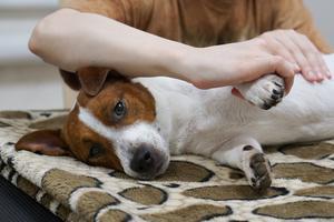 Een stressvrije hond dankzij massage