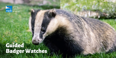 Haweswater Badger Hide: Guided Watches
