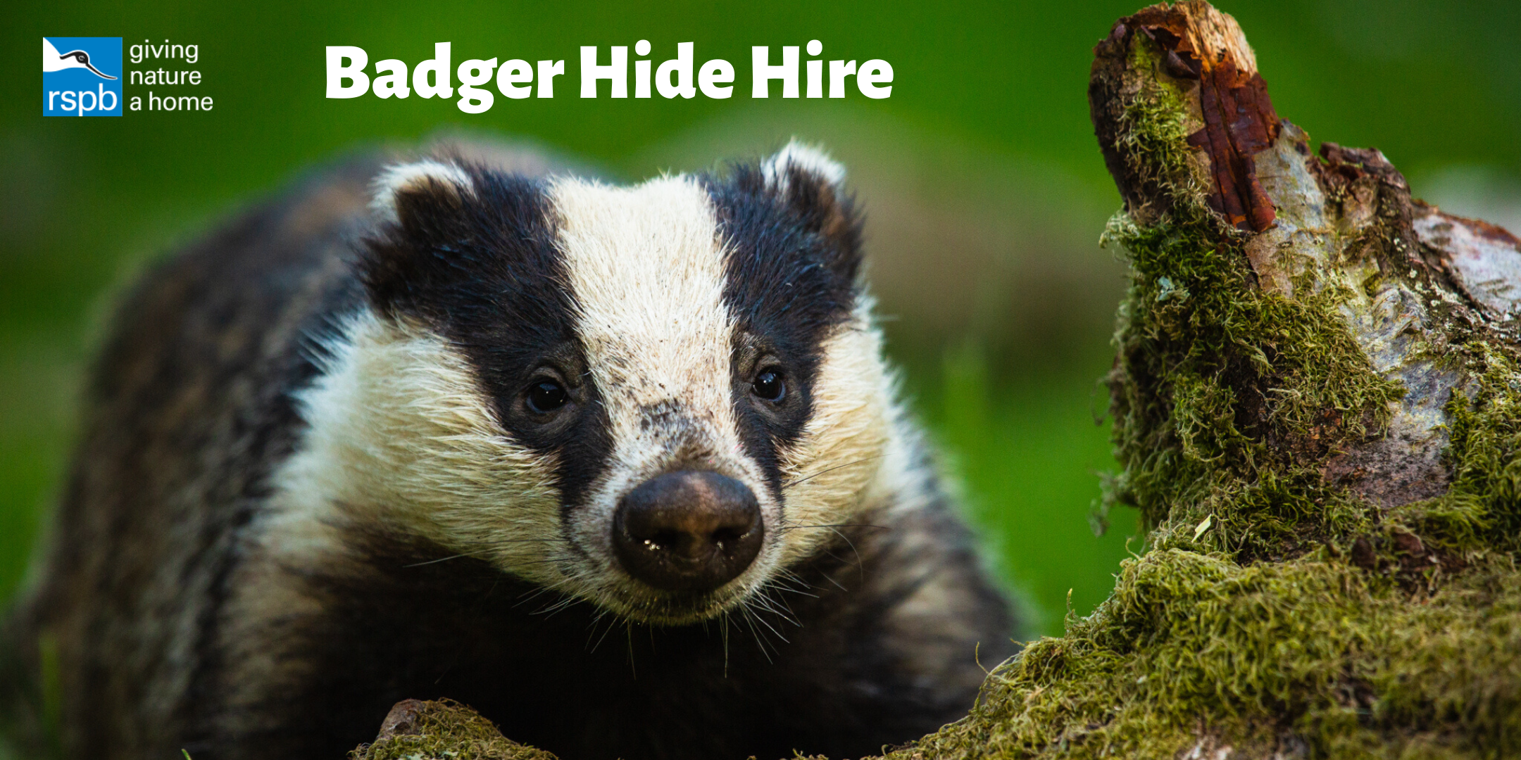 Haweswater Badger Hide: Exclusive Hire