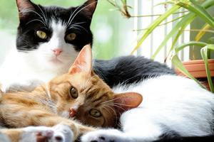 Lezing: Meer-kats-huishouden