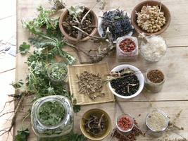 Wild Plant Permaculture Class