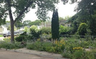 #BeTheBison - Gardening techniques that build native...
