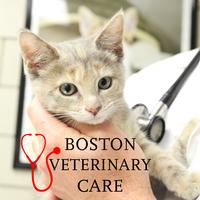 Pet Care Demo for Young Professionals