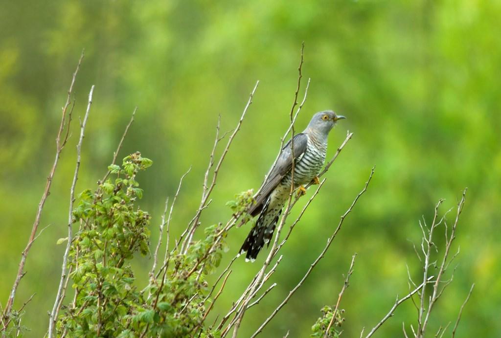 Birding for Beginners at Fairburn Ings