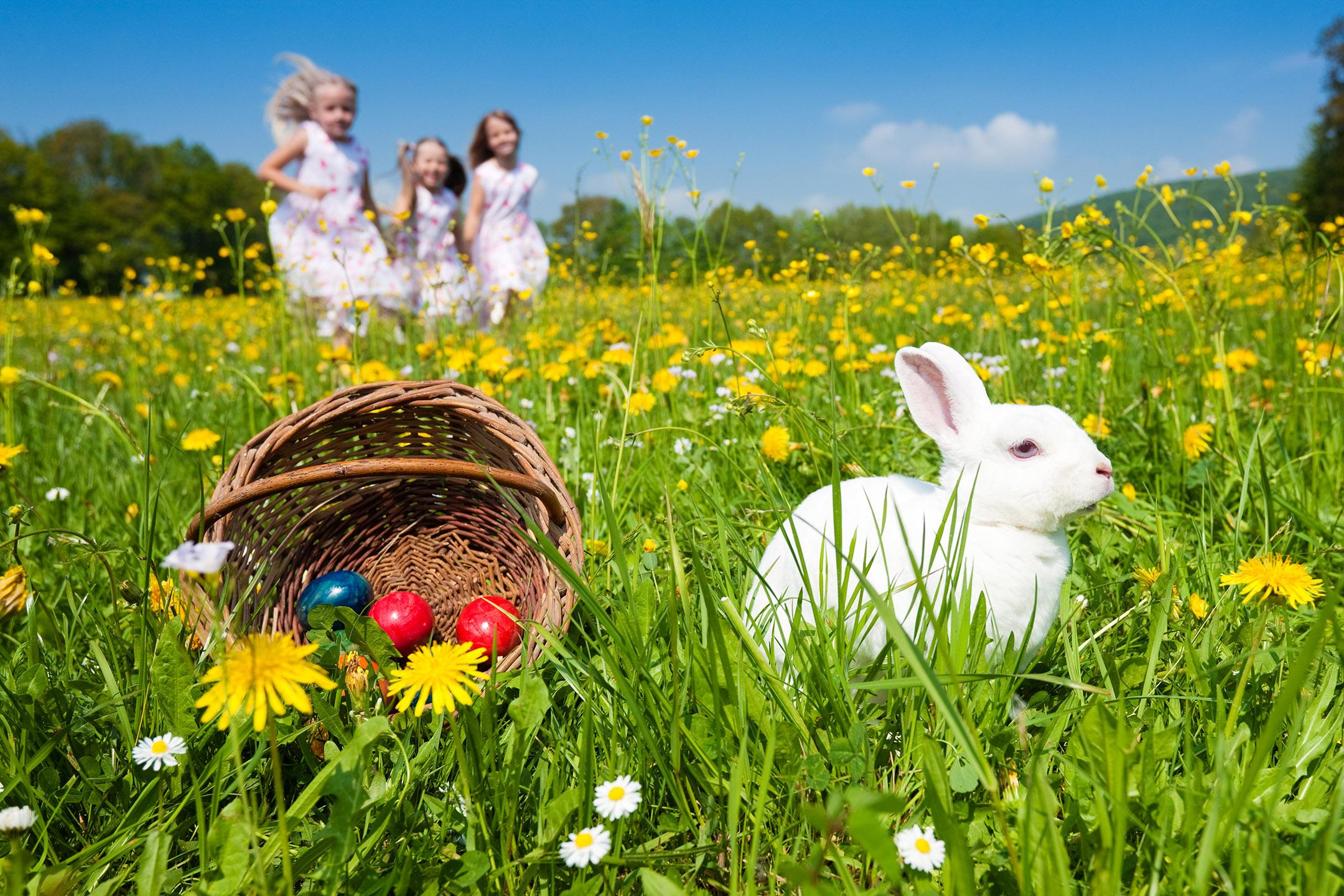 An ADF families event: Easter in the gardens, Adelaide