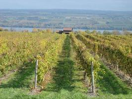 Wine Country - Niagara Falls Region - Wine Tasting...