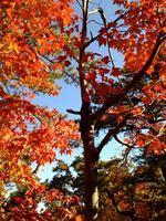 Fall Foliage: The Harriman Ridgeline - Intermediate...