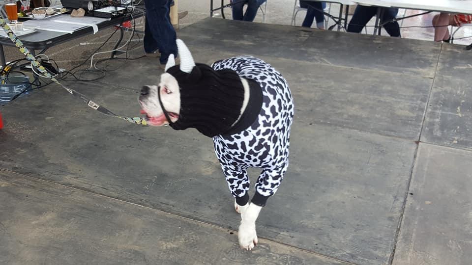 3rd Annual Lucky's Irwin Dog Festival