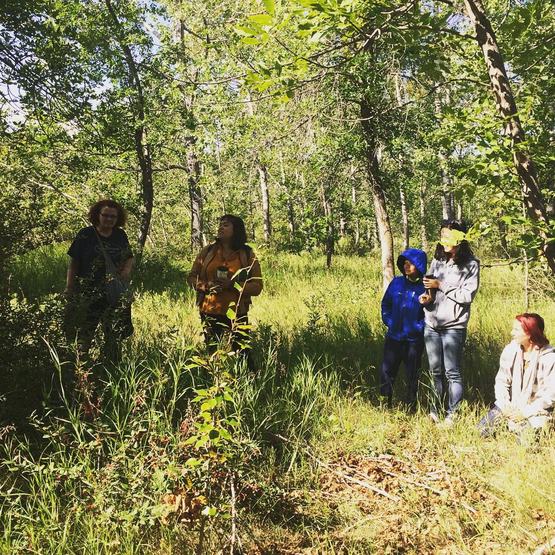 Edible and Medicinal Plant Walk in Nose Hill Park
