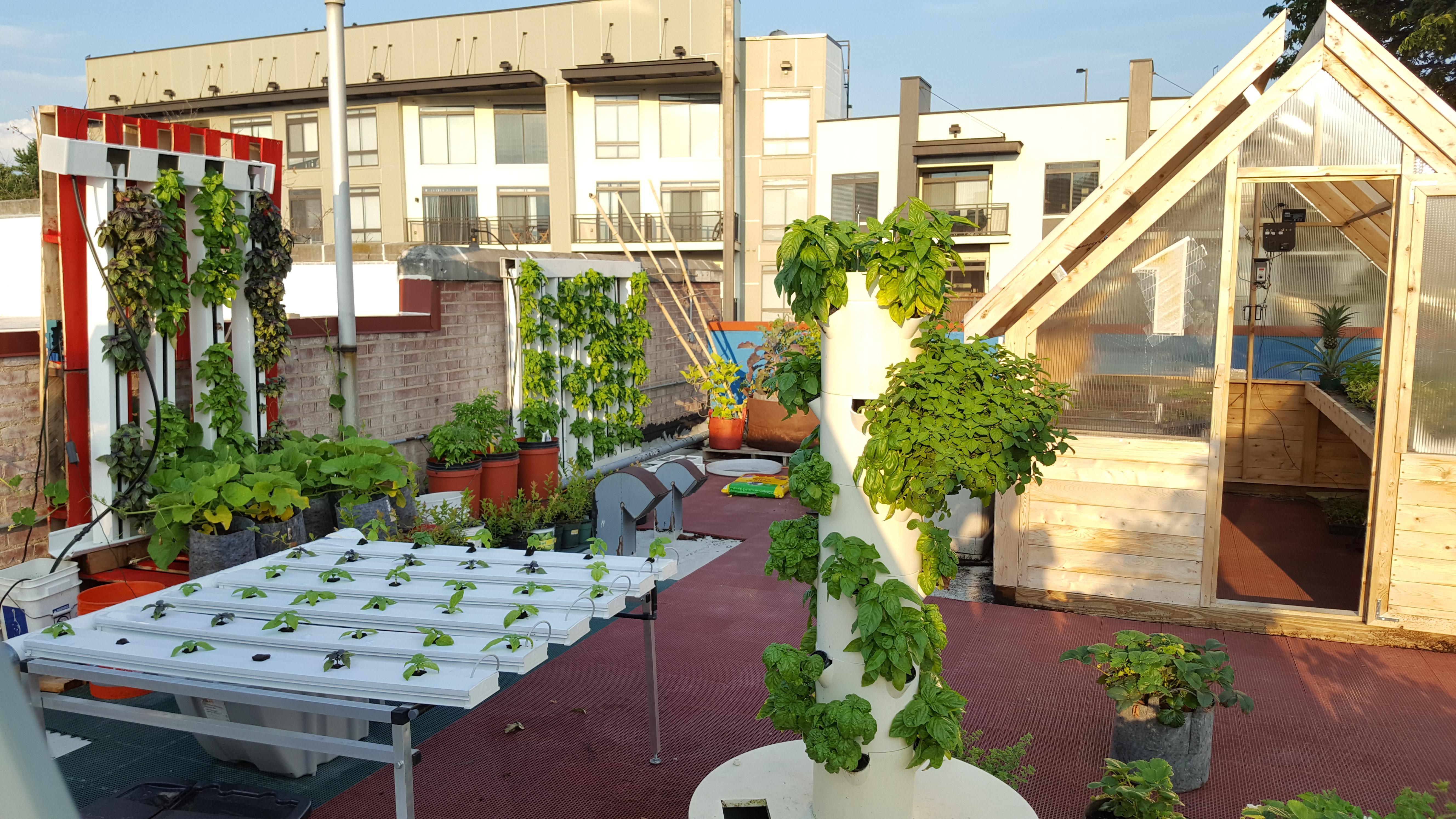 Rooftop Urban Farm Tour!