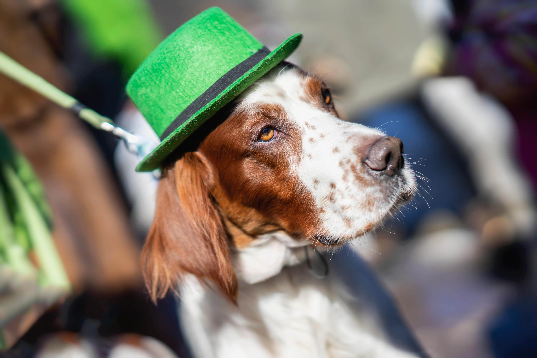 Patrick's Pawade: St. Patrick's Day Dog Parade + Costume Contest
