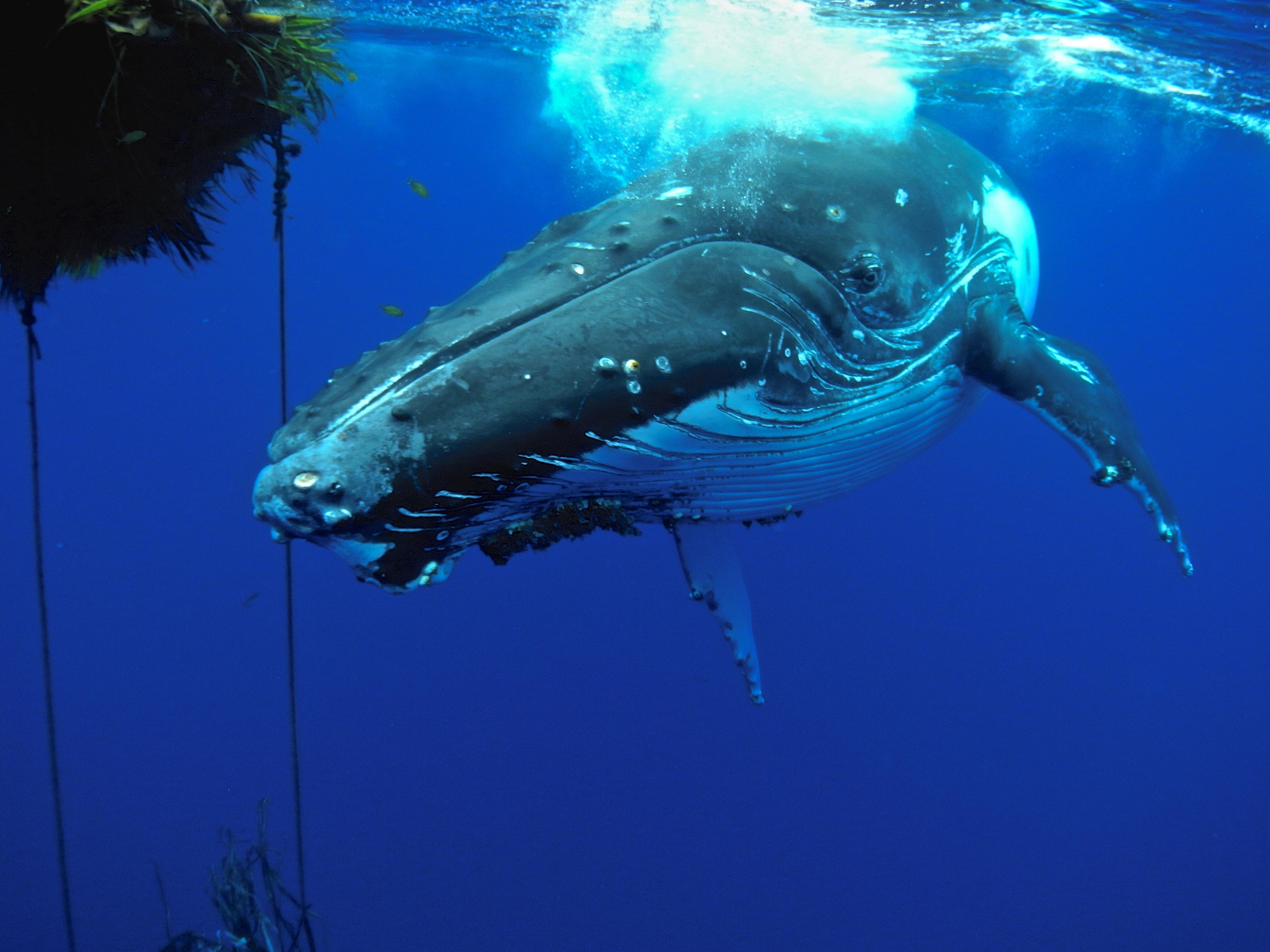 Sounds of the Ocean: A Sound Bath for Conservation