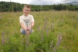 4th Annual Lupine Pasture Walk