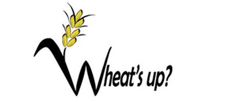 Wheat Field Day 2011